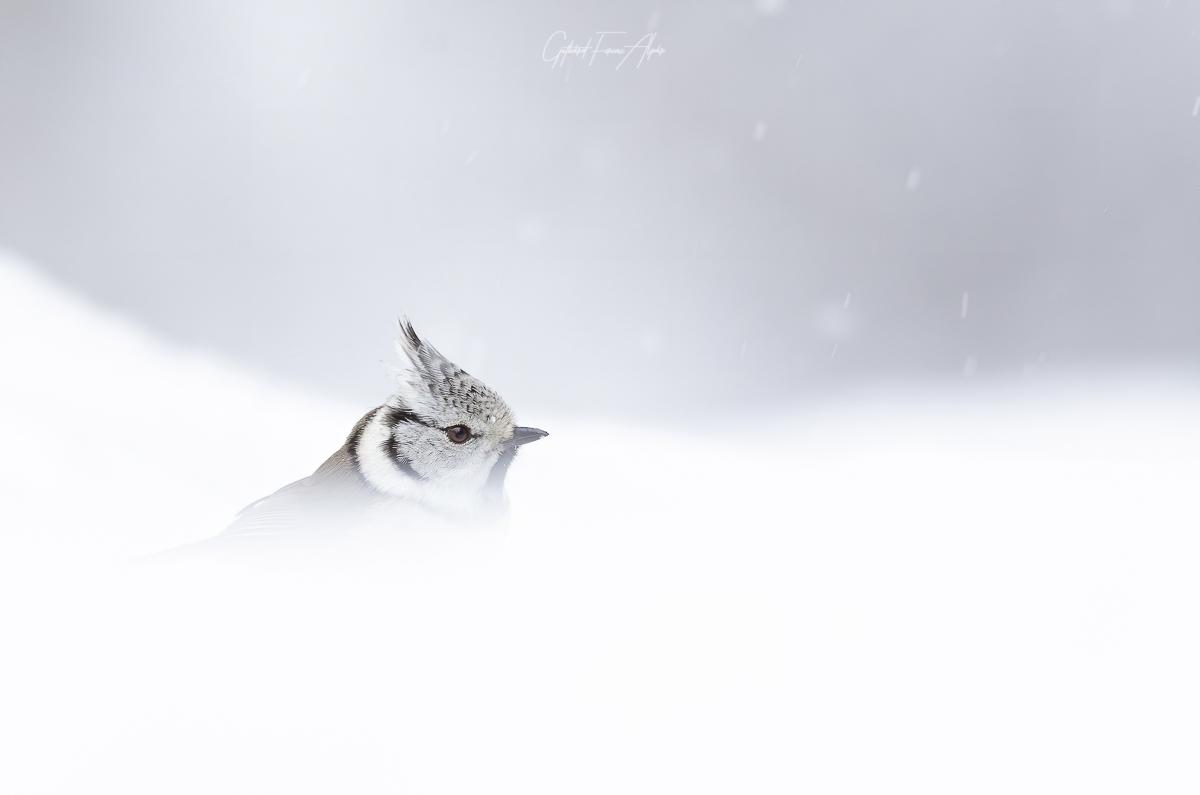 Hóban