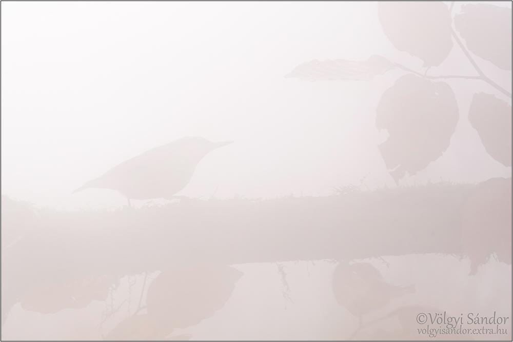 Köderdő