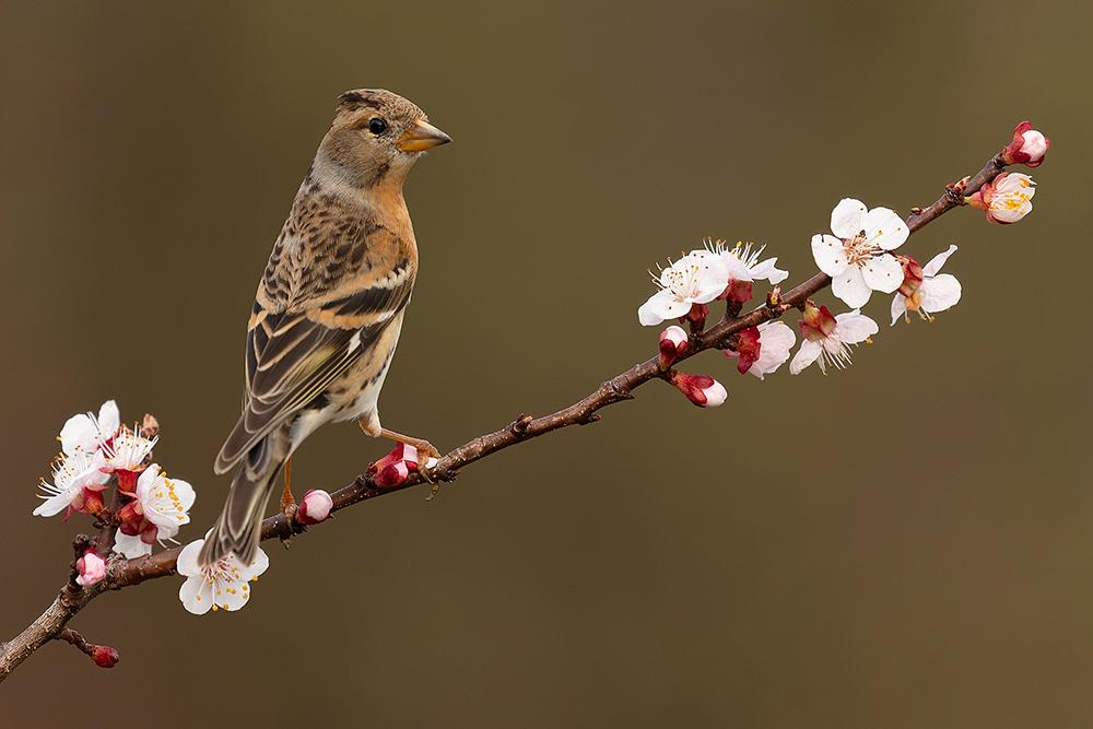 Jön a tavasz