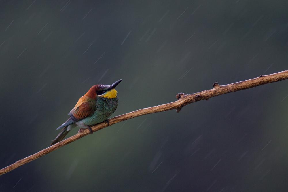 Eső 2.0