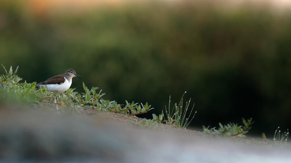 Buzgárhalmon