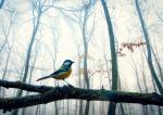 Az erdő kincse