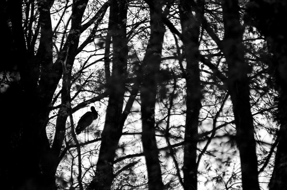 Fák oltalmában