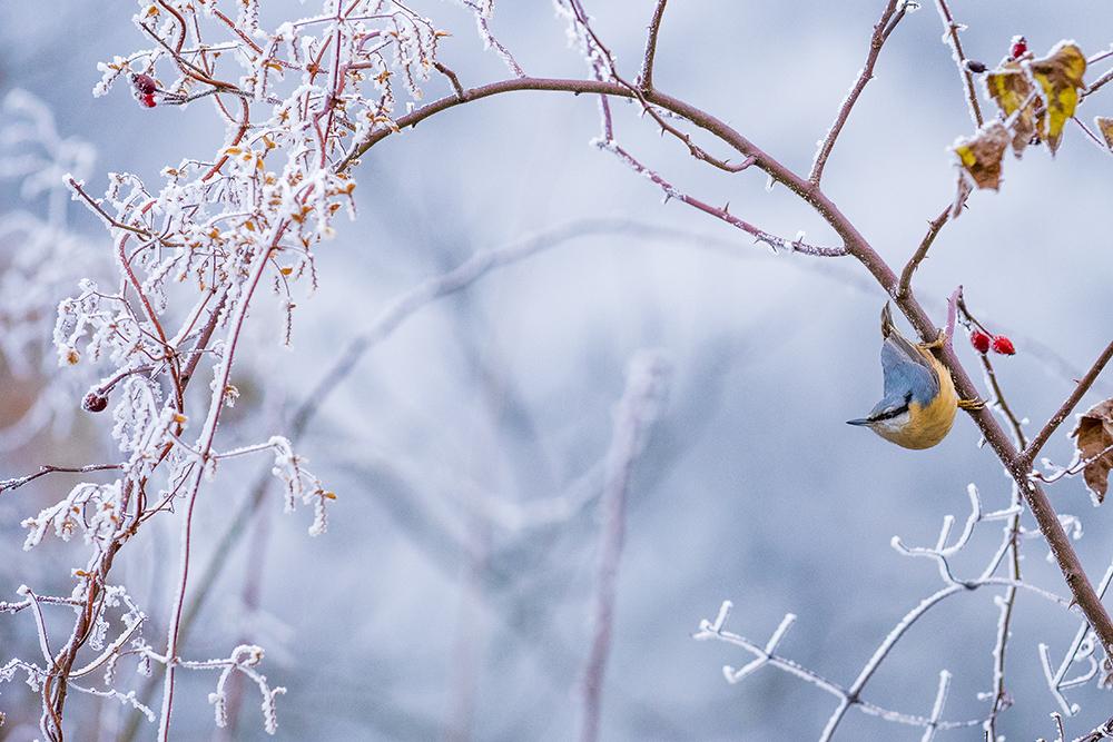 Csuszka a téli tájban