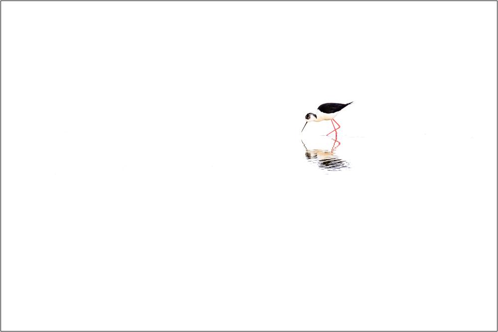 Magányos gólyatöcs