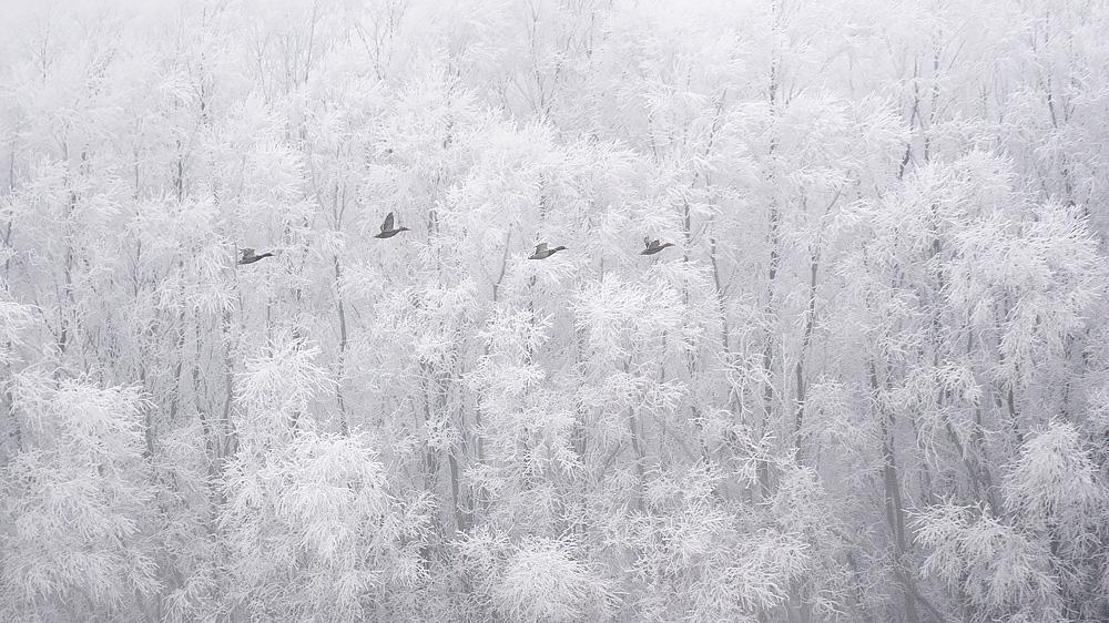 A téli Dunánál