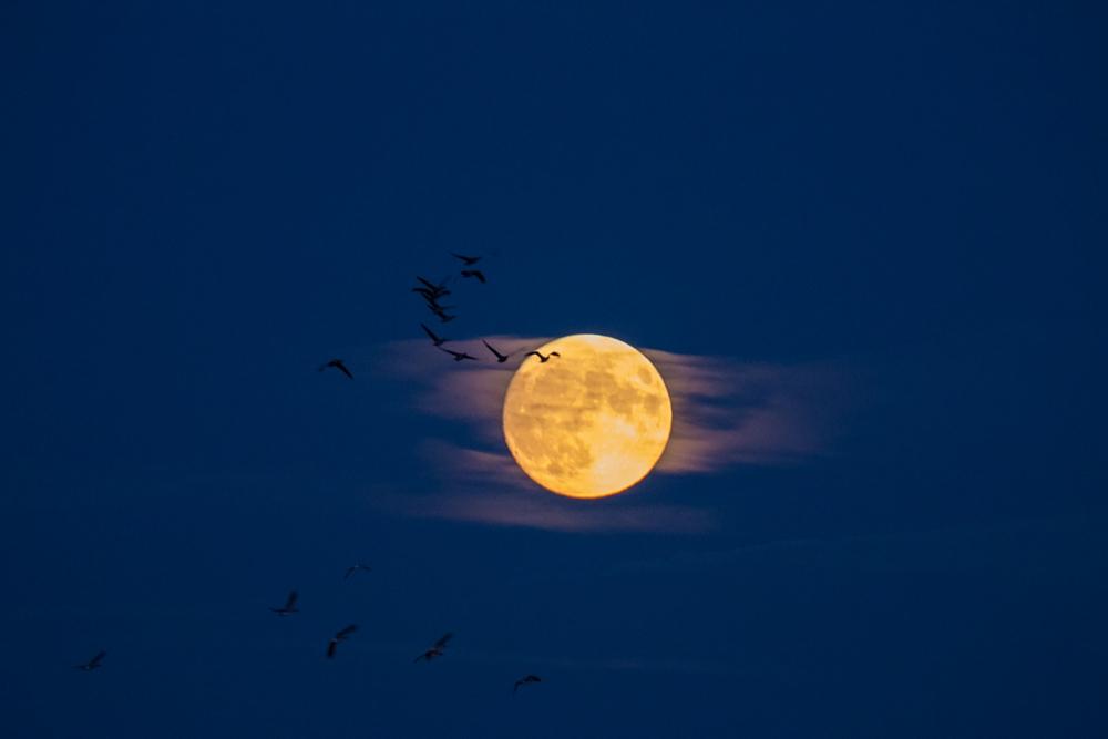 Éjszakai repülés
