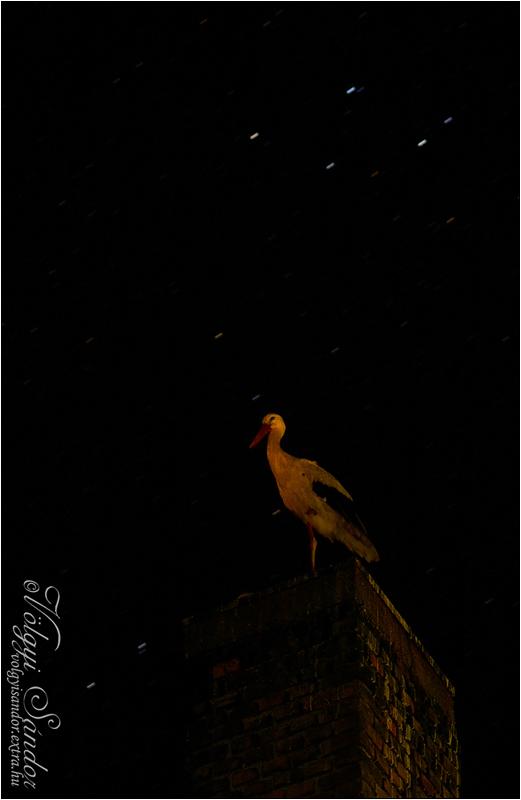 Éjszakázó gólya