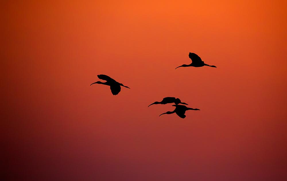 Hajnali repülés