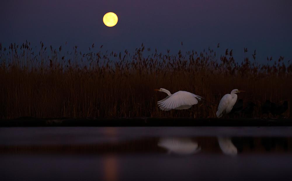Holdfényben