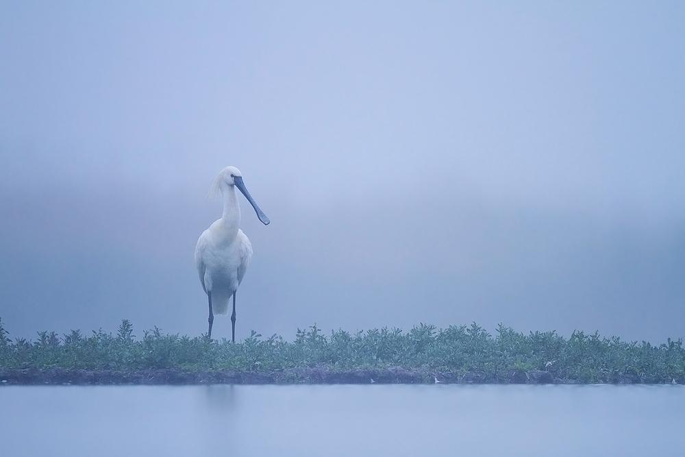 Csend sziget