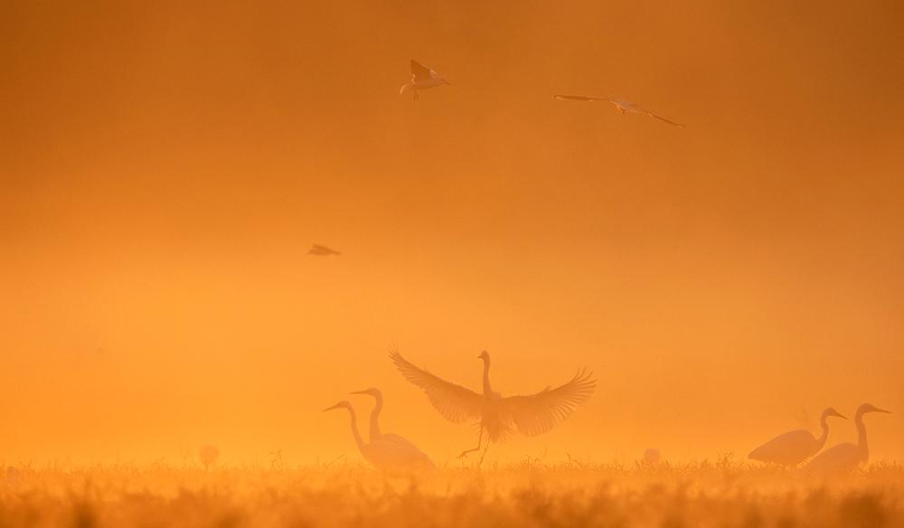 Ködös landolás