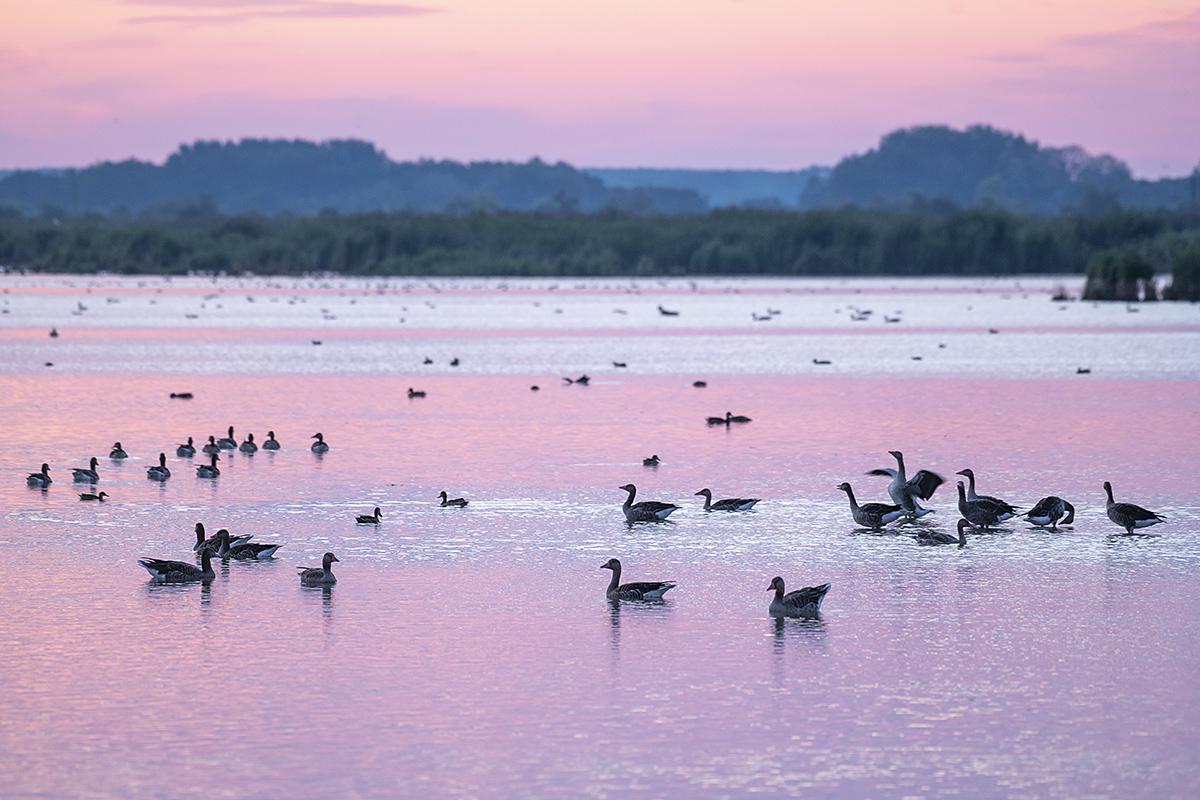 Rózsaszín hajnal