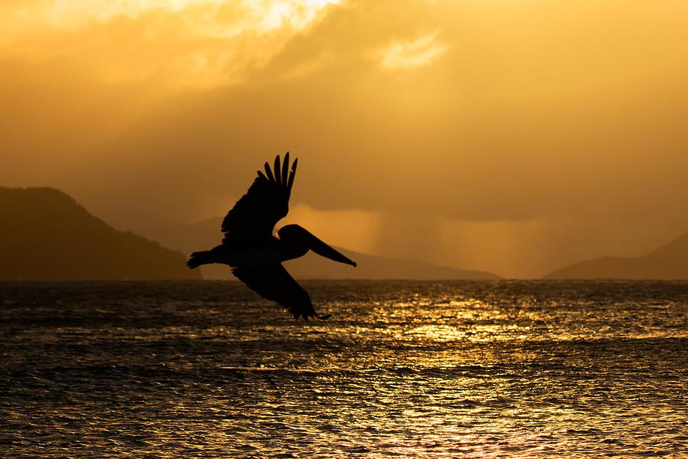 Repülés a naplementében